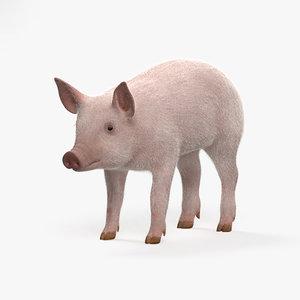 pig piglet model