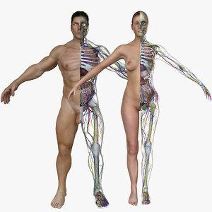 anatomy 3D model