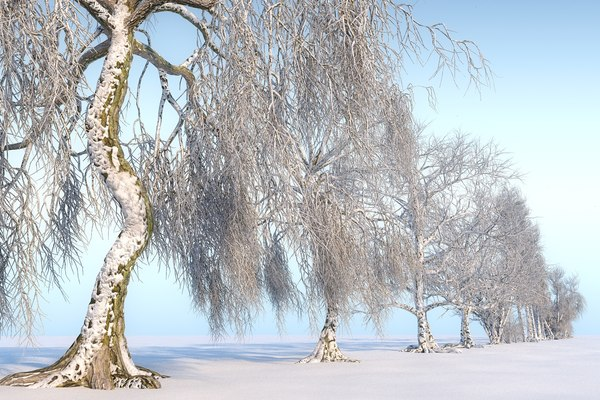 winter trees hd pack 3D model