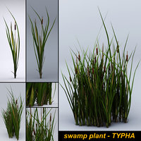 Swamp plant - TYPHA- Game asset