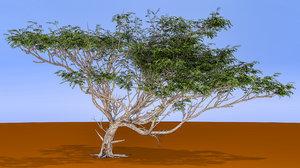 3D model acacia tree
