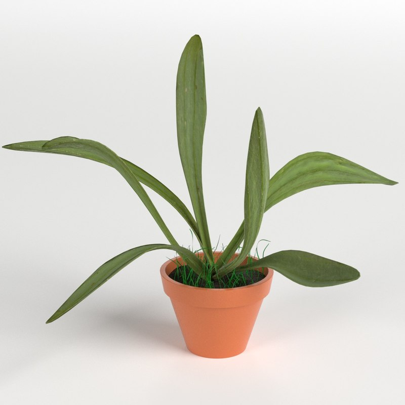 3D model potted plant 1