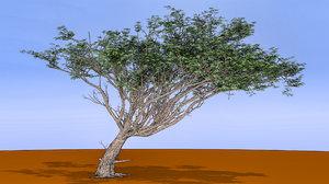 acacia tree model
