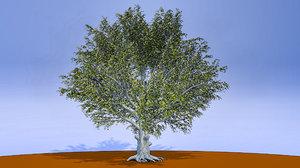 3D american beech tree