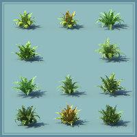 Ferns Kingdom 11 Species