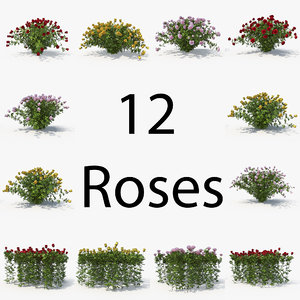 rose pack bush model