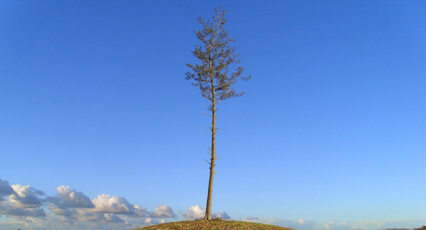3D pine tree 1