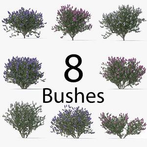3D model lilac pack bush