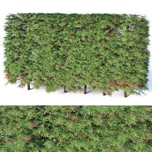 occidentalis hedge thuya 3D model