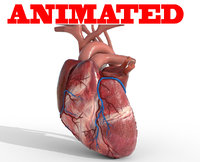 human heart animation 3D