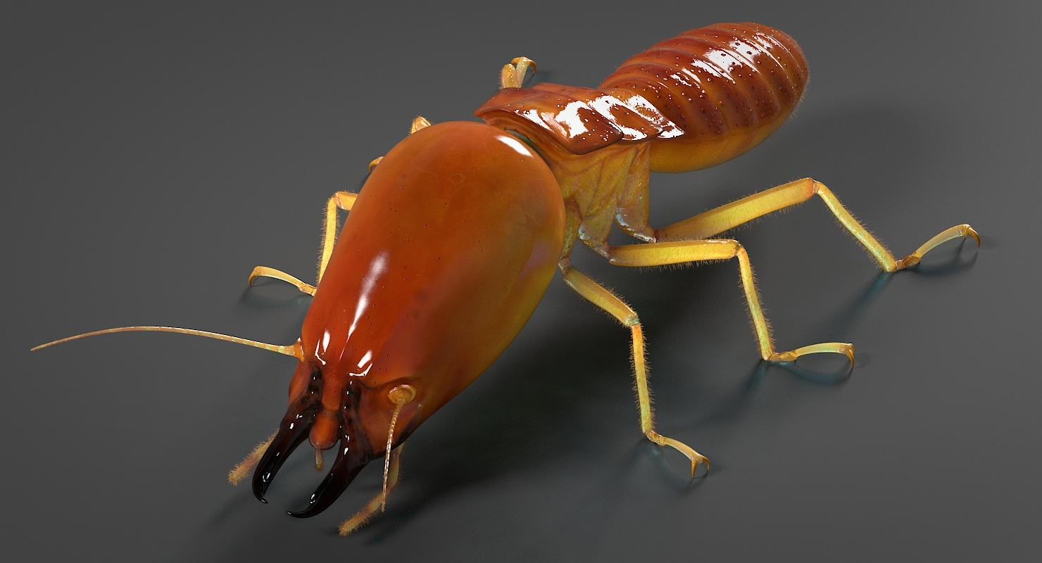 realistic termite real 3D