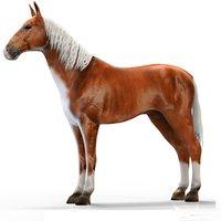 3D realistic horse games