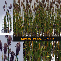 3D plant reed swamp model