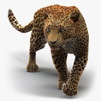 Leopard (2) (Rigged) (Fur)