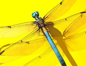 3D dragonfly rigged