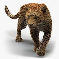 3D leopard 3 fur