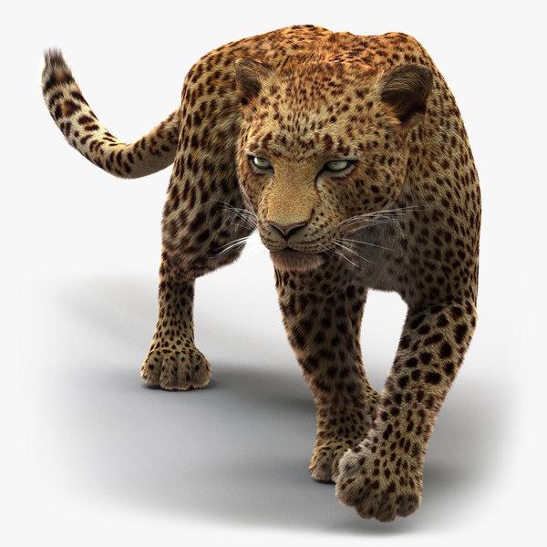3D model leopard animation 3 fur