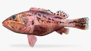 3D rosy scorpionfish model