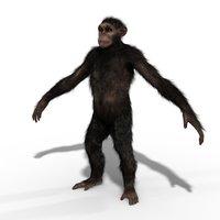 ape chimp chimpanzee 3D model