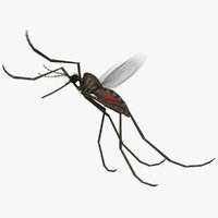 3D model common house mosquito animation