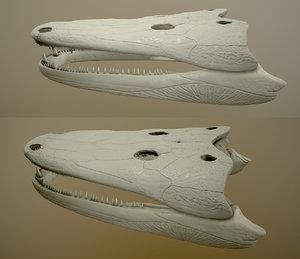 cyclotosaurus 3D model