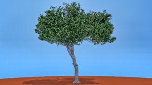 3D italian stone pine tree