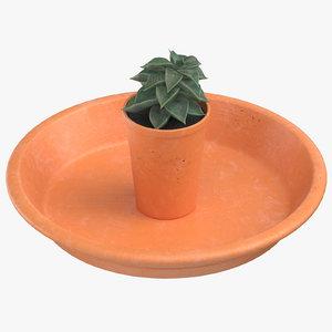 3D model succulent 06 small