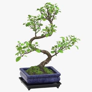 bonsai tree 02 3D model