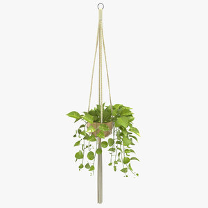 hanging house plant 01 3D