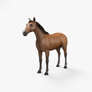 3D horse mammal animal model