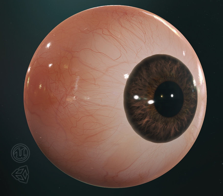 3D model realistic human eye pbr