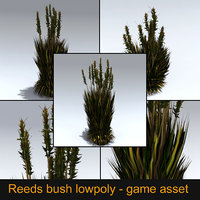 bush reed 3D model
