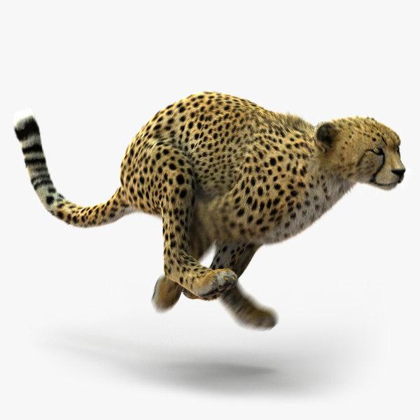 cheetah fur animation 3d ma
