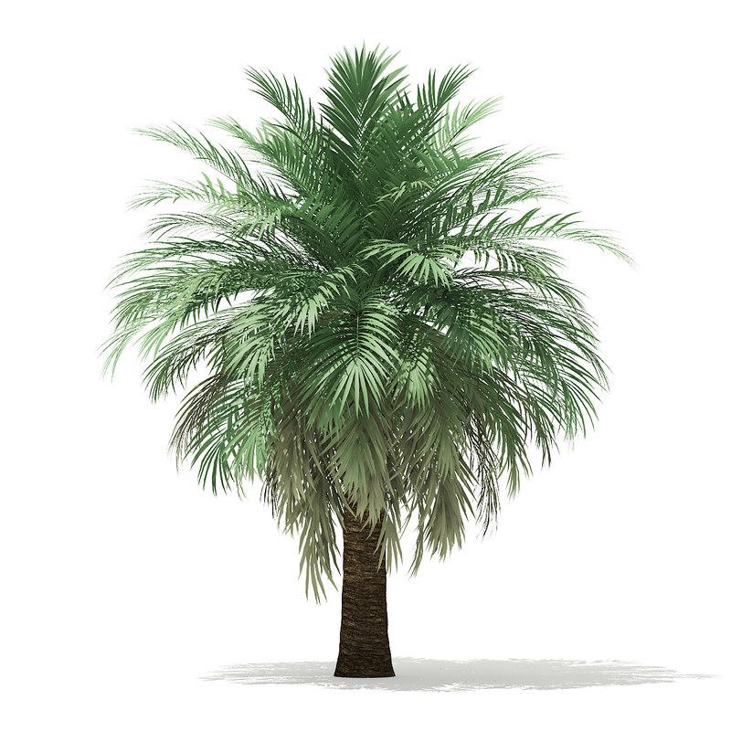 3D model butia palm tree 4