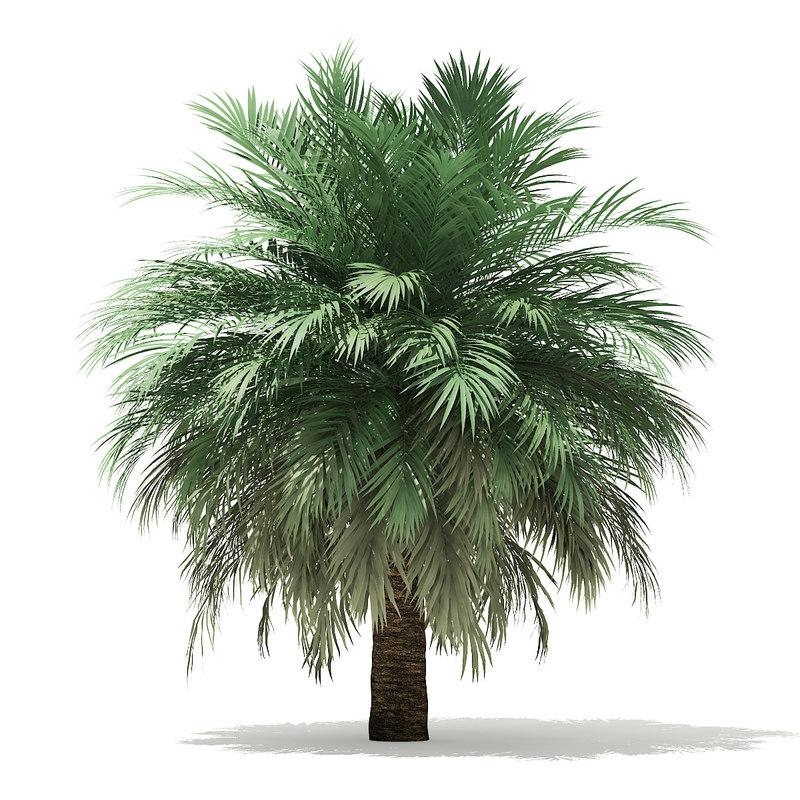 butia palm tree 4m 3D model