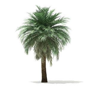 3D butia palm tree 5