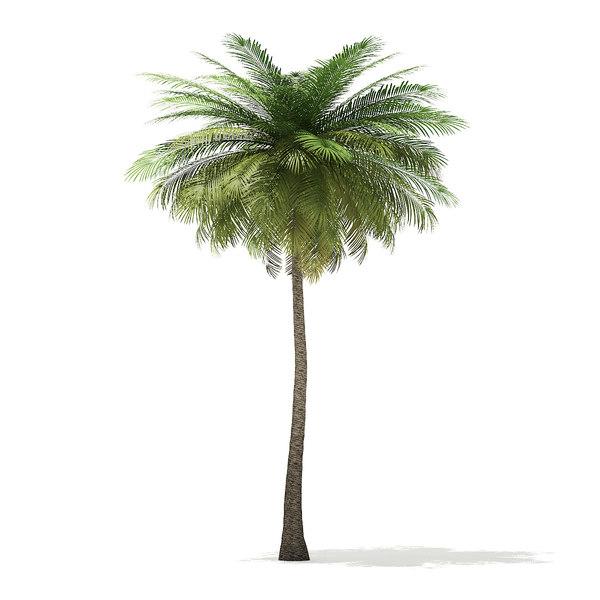 coconut palm tree 9m 3D model