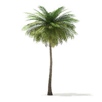 coconut palm tree 9m 3D model