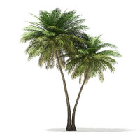 coconut palm tree 9 model