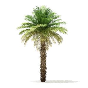 3D date palm tree 7m model