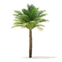 3D model date palm tree 5m
