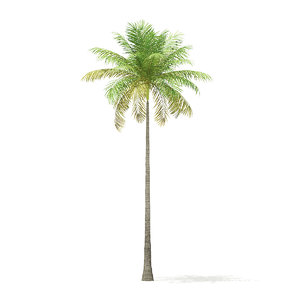 3D model bottle palm tree 8m