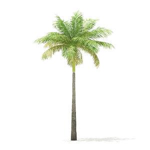 3D bottle palm tree 6