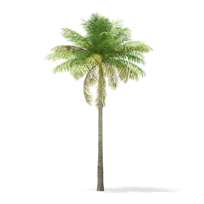 bottle palm tree 7m 3D