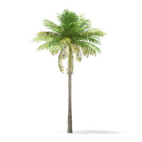 bottle palm tree 7m 3D