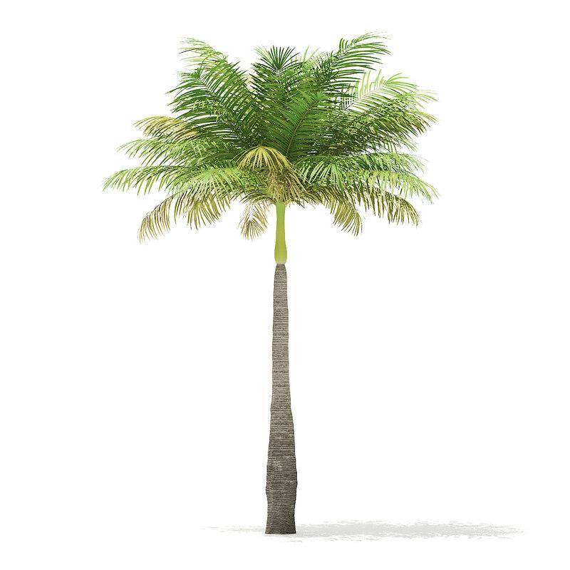 3D bottle palm tree 5 model