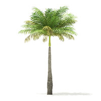 3D bottle palm tree 5 model