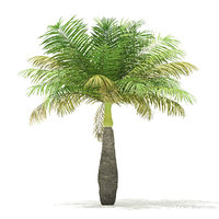 3D model bottle palm tree 3