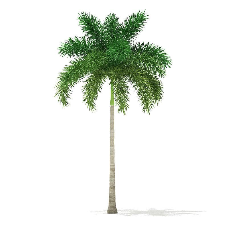 foxtail palm tree 7 model