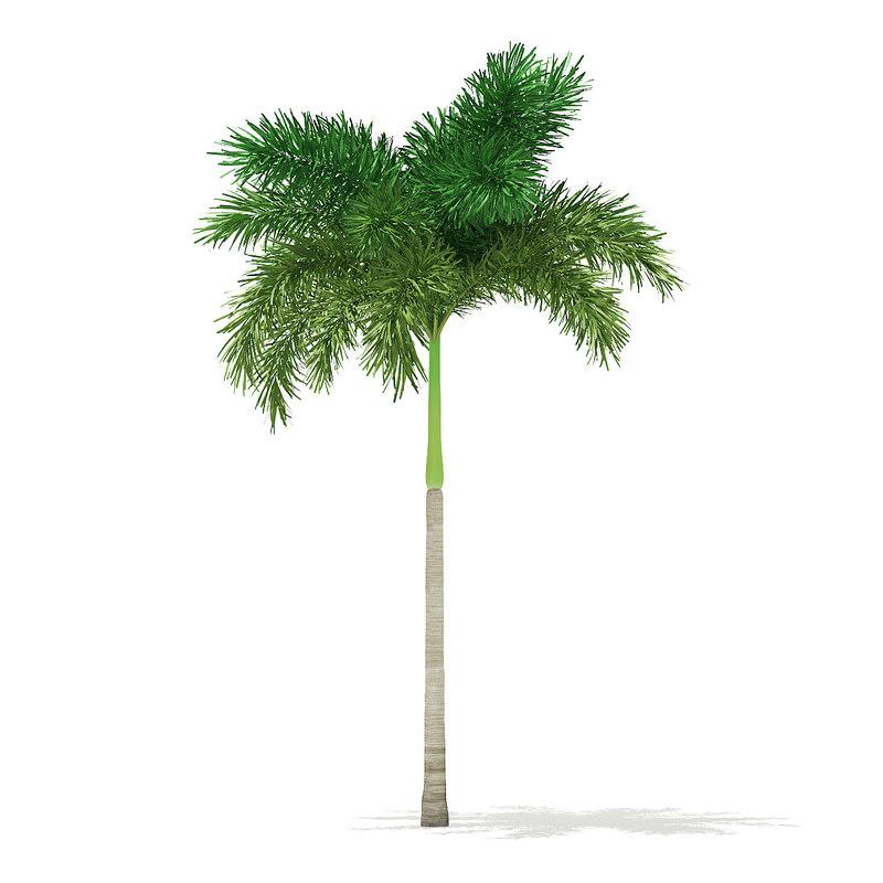 foxtail palm tree 6 3D model